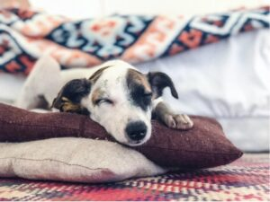 Blankets For Pets